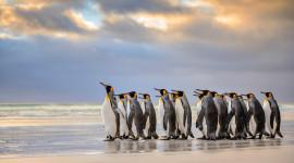 Penguins North Sunrise Image