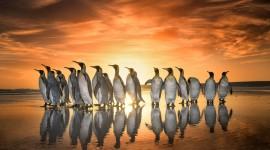 Penguins North Sunrise Image Download