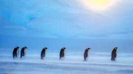 Penguins North Sunrise Photo