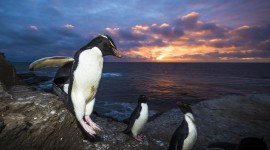 Penguins North Sunrise Photo Free