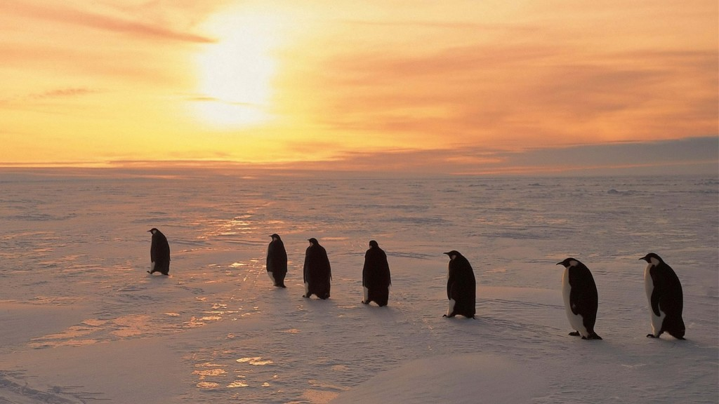 Penguins North Sunrise wallpapers HD