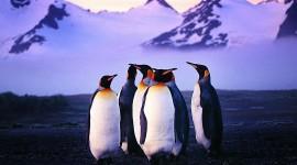 Penguins North Sunrise Wallpaper 1080p