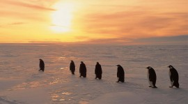 Penguins North Sunrise Wallpaper
