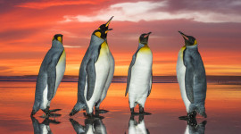 Penguins North Sunrise Wallpaper For Android