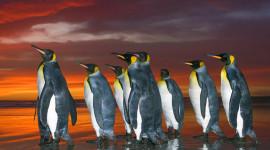 Penguins North Sunrise Wallpaper For IPhone