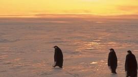 Penguins North Sunrise Wallpaper For Mobile