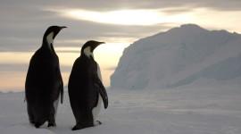 Penguins North Sunrise Wallpaper Free
