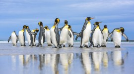 Penguins North Sunrise Wallpaper Full HD