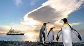 Penguins North Sunrise Wallpaper Gallery