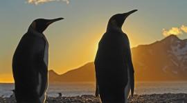 Penguins North Sunrise Wallpaper HQ