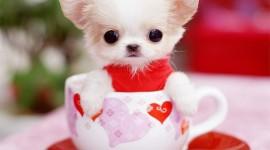 Puppy Cup Desktop Wallpaper
