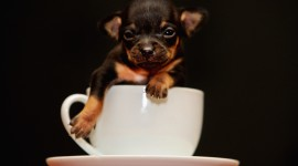 Puppy Cup Wallpaper