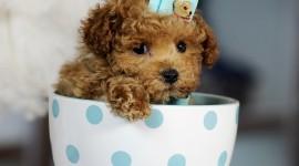 Puppy Cup Wallpaper For Desktop