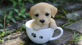 Puppy Cup Wallpaper For PC
