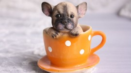 Puppy Cup Wallpaper Gallery
