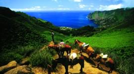 Robinson Crusoe Island Wallpaper Download Free