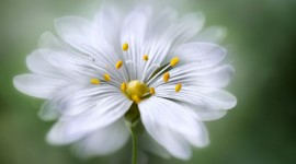 4K Flower Stamens Aircraft Picture