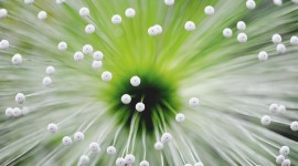 4K Flower Stamens Best Wallpaper