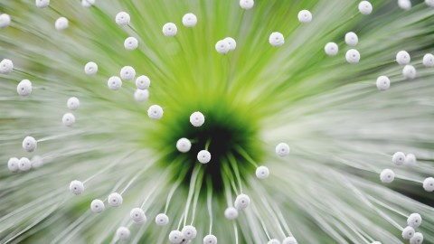 4K Flower Stamens wallpapers high quality