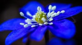 4K Flower Stamens Image Download