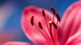 4K Flower Stamens Wallpaper 1080p