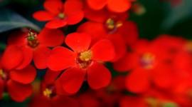 4K Flower Stamens Wallpaper For Android