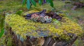 4K Stump Moss Desktop Wallpaper
