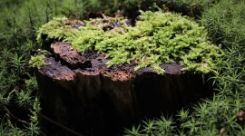 4K Stump Moss Desktop Wallpaper HD