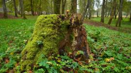 4K Stump Moss Photo