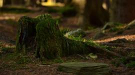 4K Stump Moss Photo Free#1