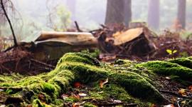 4K Stump Moss Photo#1