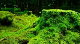 4K Stump Moss Wallpaper