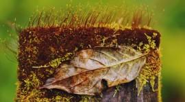 4K Stump Moss Wallpaper Background