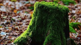 4K Stump Moss Wallpaper For Desktop
