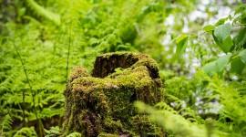 4K Stump Moss Wallpaper Gallery