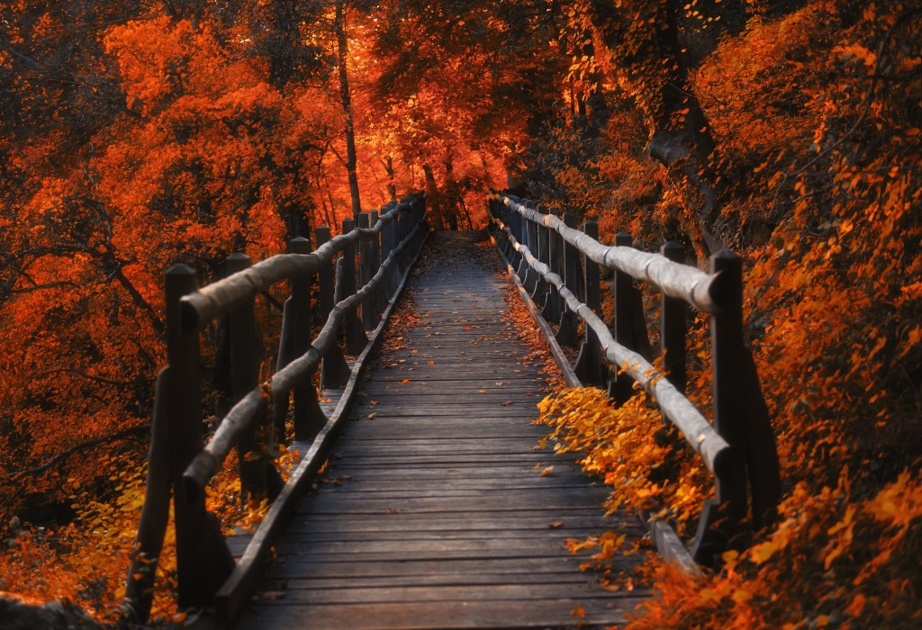 4K Wooden Bridge wallpapers HD