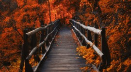 4K Wooden Bridge Best Wallpaper