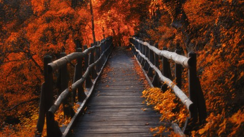 4K Wooden Bridge wallpapers high quality