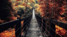 4K Wooden Bridge Wallpaper For Desktop