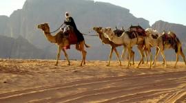 Bedouins Wallpaper Download Free