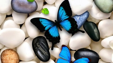 Butterfly Stone wallpapers high quality