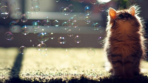 Cat Soap Bubbles wallpapers high quality