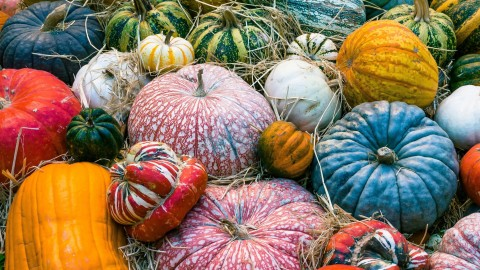 Colorful Pumpkins wallpapers high quality