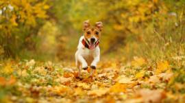 Dog Autumn Desktop Wallpaper