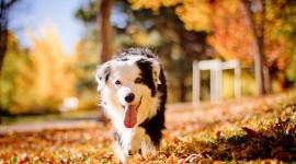 Dog Autumn Desktop Wallpaper For PC