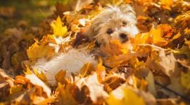 Dog Autumn Desktop Wallpaper HD