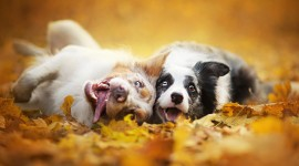 Dog Autumn Photo