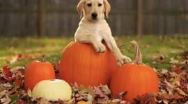 Dog Autumn Photo Download