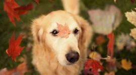 Dog Autumn Photo Free