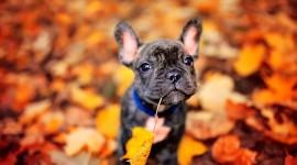 Dog Autumn Wallpaper